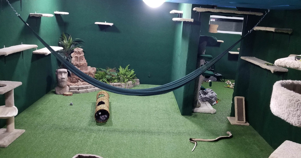 Man Tragically Loses His Brother, Builds Cat Jungle For Brother's Bengals To Make Him Proud