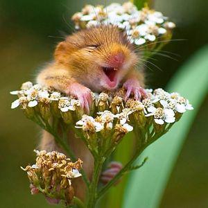 bored hamster