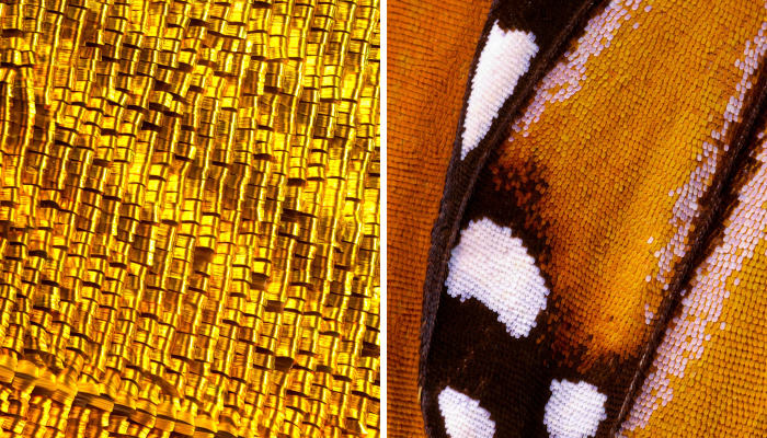I Combine Thousands Of Photos To Create One Image Of A Butterfly Wing