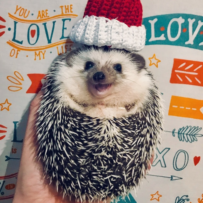 Meet Rick, The Cutest Christmas Hedgehog From Ukraine