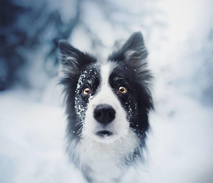 Die 50 besten Hunde Fotos, die ich je geschossen habe