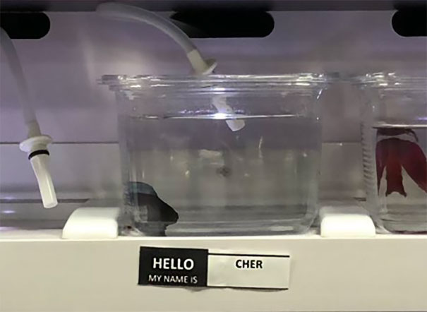 Pet Store Gives Celebrity Names To Their Fishes And They Are