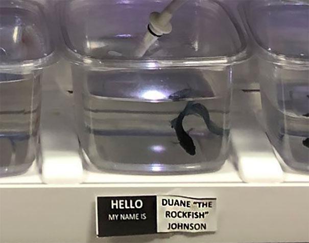 "Duane ""The Rockfish"" Johnson"