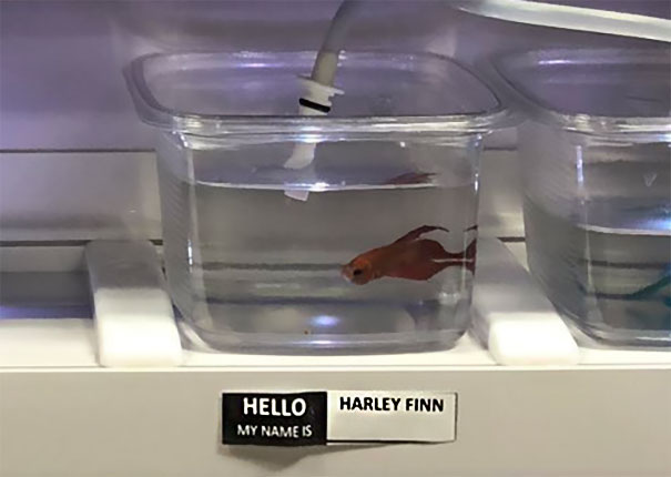 Harley Finn