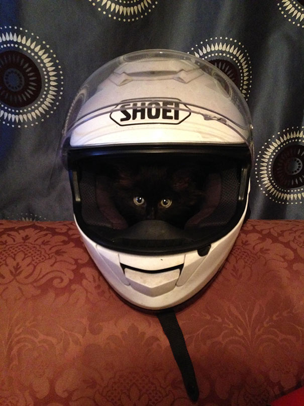 My Kitten Likes To Sleep In My Boyfriend's Motorbike Helmet