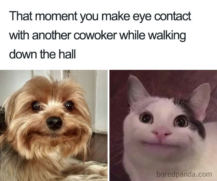 Funny-Office-Coworker-Memes
