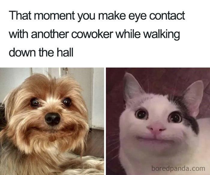Funny-Office-Collega-Memes