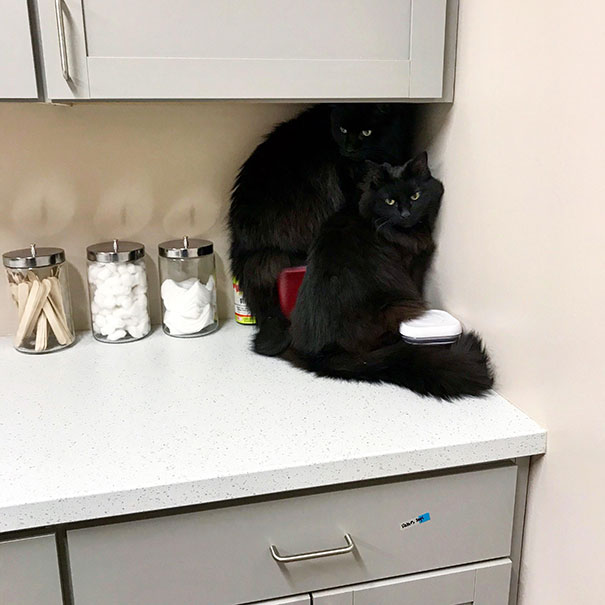 Jasper And Neil Were A Little Dramatic About Their Recent Vet Visit