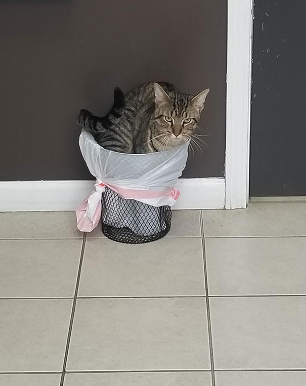 Took My Cat To The Vet Today. He Was Feeling Pretty Trashy