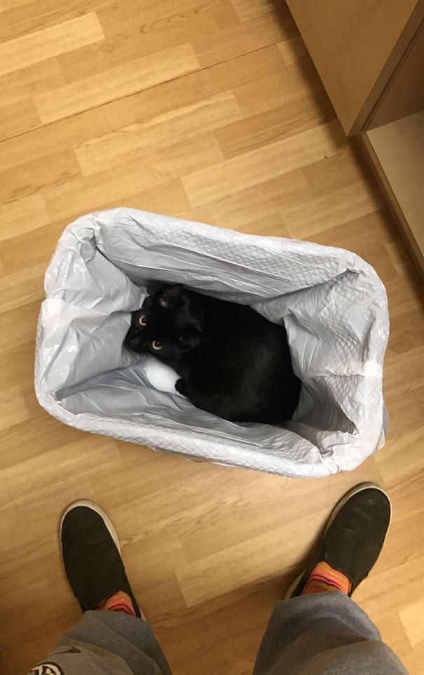 My Cat At The Vet. Not A Good Patient At All. This Is Her Go-To Hiding Spot There