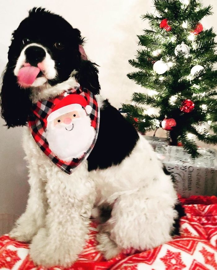 These Dogs In Ugly Sweaters Sleigh The Internet