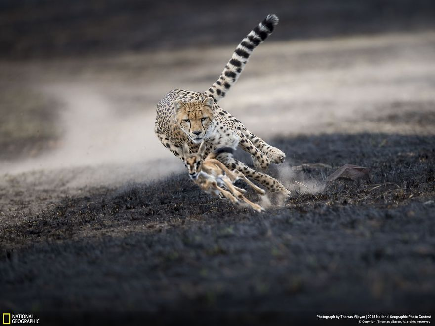 50 Of The Most Incredible Photos Of The National Geographic Photo Contest Of 2018 Bored Panda