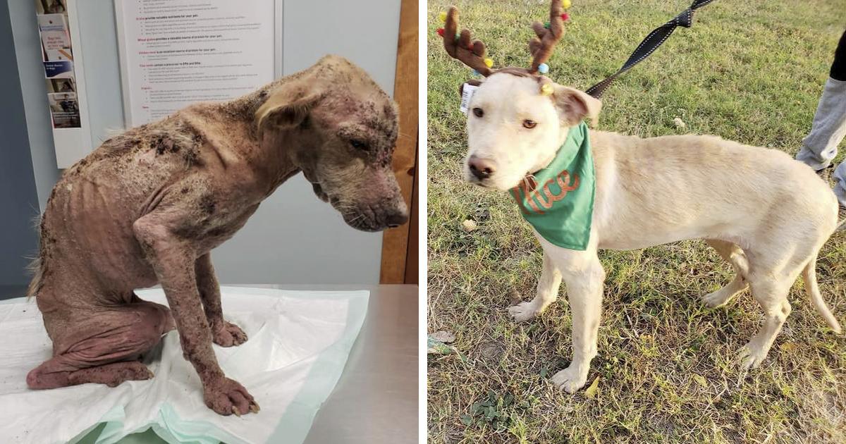 Rezultat slika za unknown dog saved on streets of texas