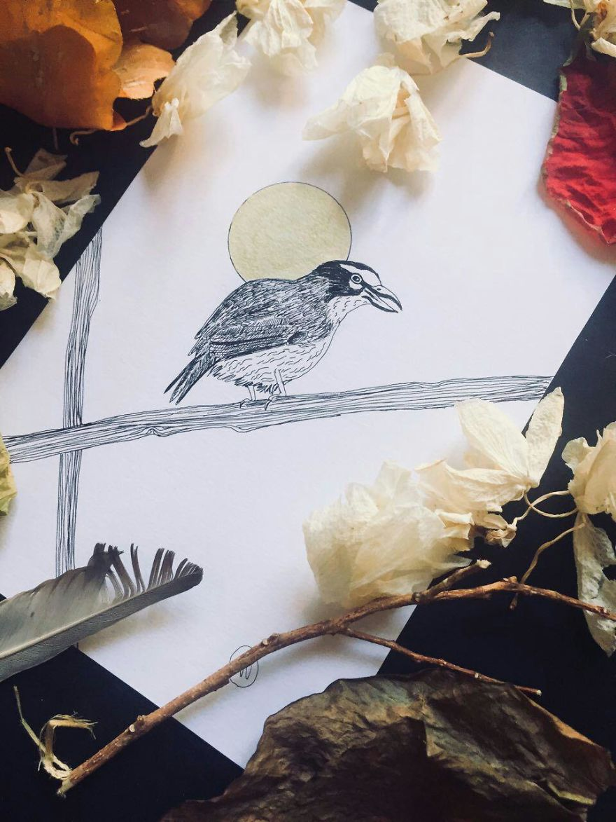 Lovely Colombian Bird Illustrations