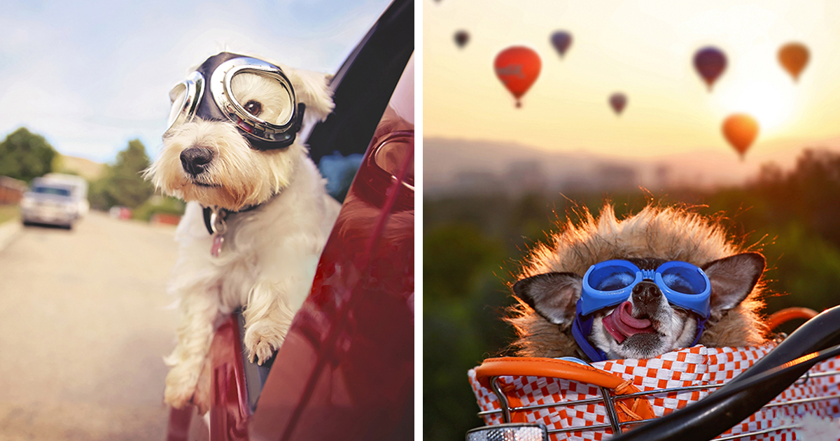 I Photograph Senior Pets To Give Owners A Precious Memory Of Them (30 Pics)
