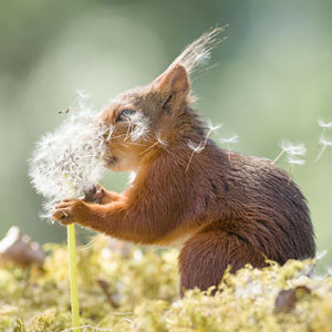 I Followed Squirrels Daily With My Camera For 6 Years And Here Are 50 Of My Best Photos