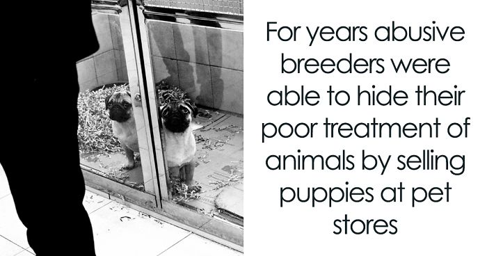 UK Government Bans Selling Puppies At Pet Stores After This