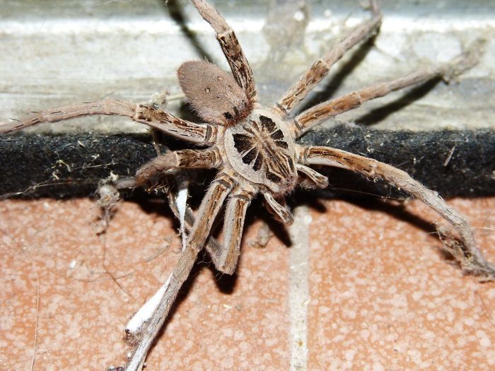 Interesting Facts About Wolf Spiders
