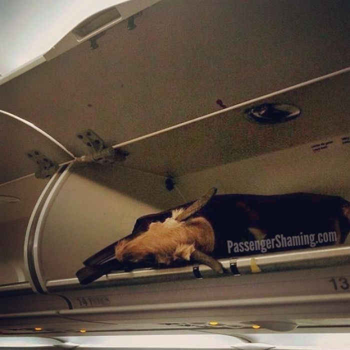Ok Kids, So Which One Of You Left Your Bag Full O' Dead Animal Head In The Overhead Bin?