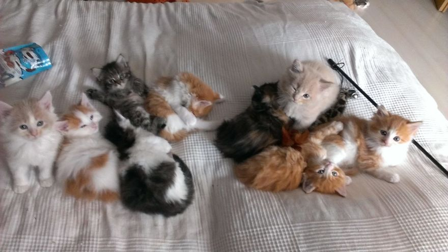 50 Cute Maine Coon Kittens That Are Actually Giants Waiting To Grow