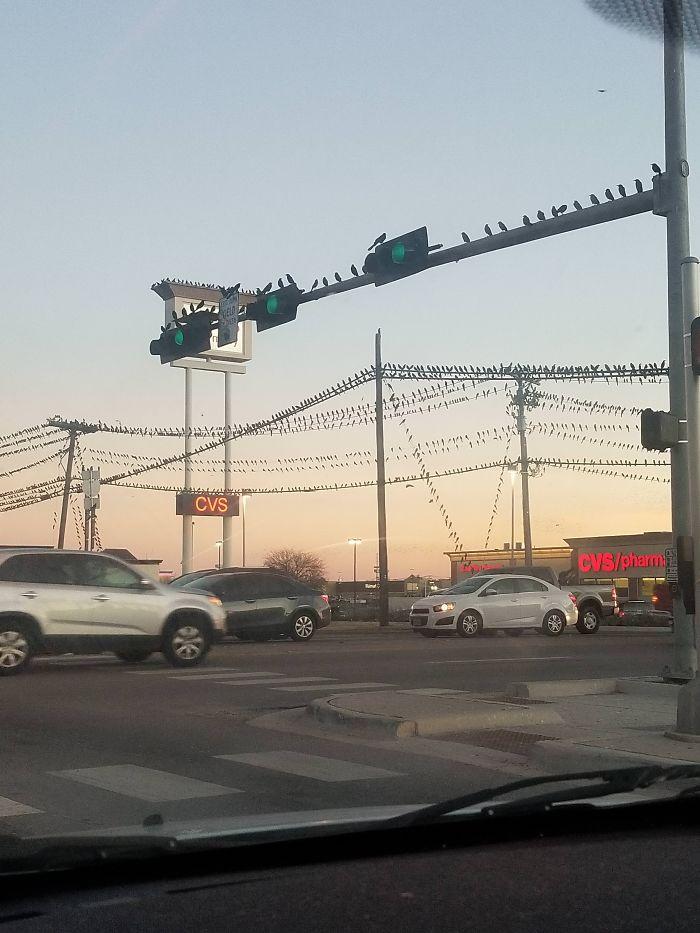 Tenemos un problema de pájaros en Texas