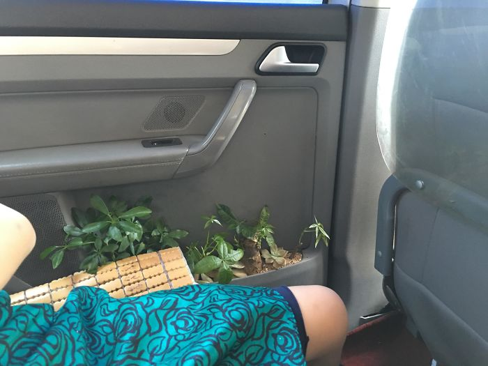 This Chinese Taxi Driver Grows Plants In His Cab