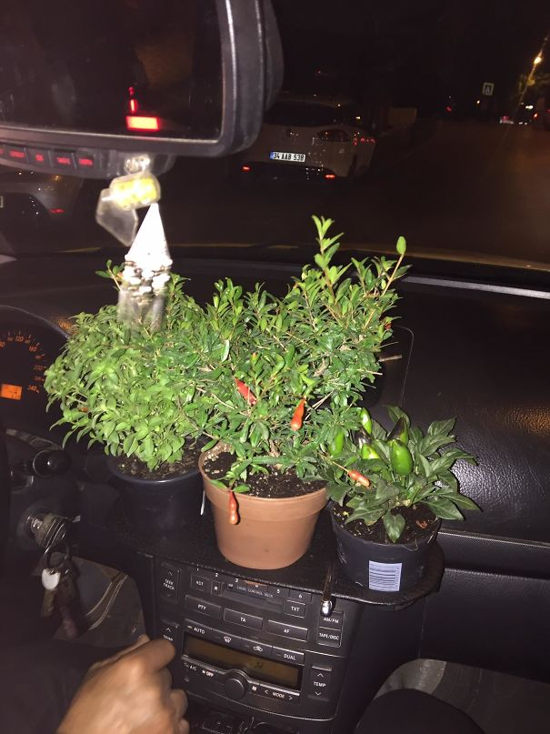 This Taxi Driver Grows Chili Peppers And More On The Cup Holder