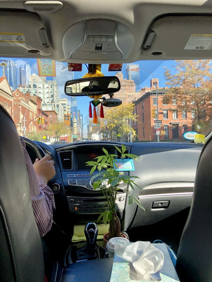 My Uber Driver Has A House Plant In His Car