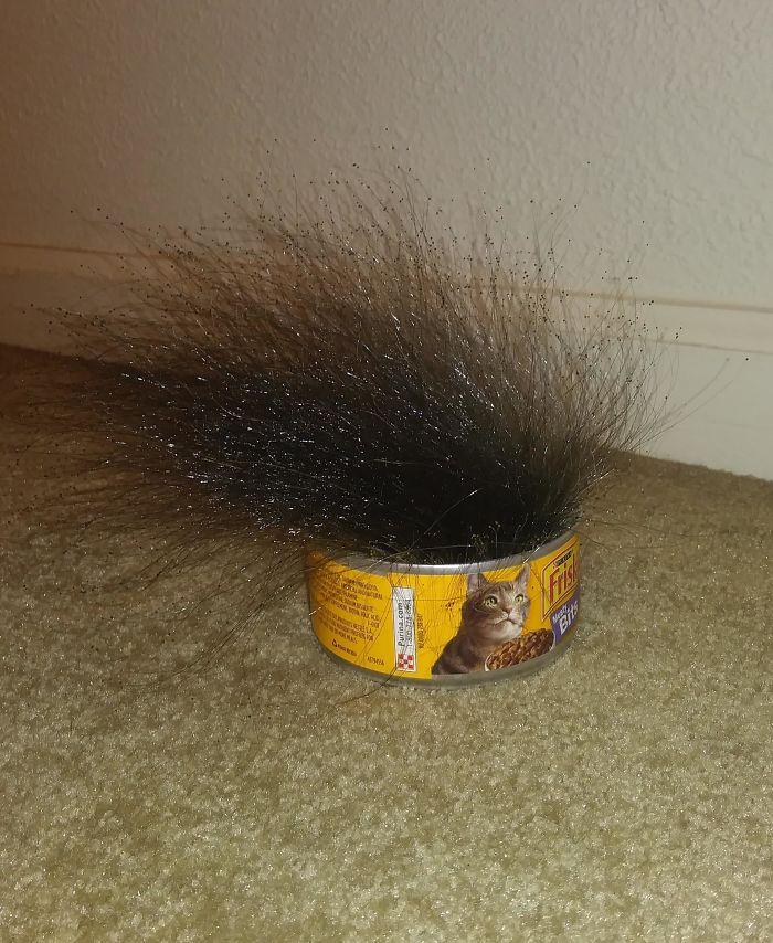 Moho extraño creciendo de una lata de comida para gatos que dejé en un cuarto vacío durante 10 días