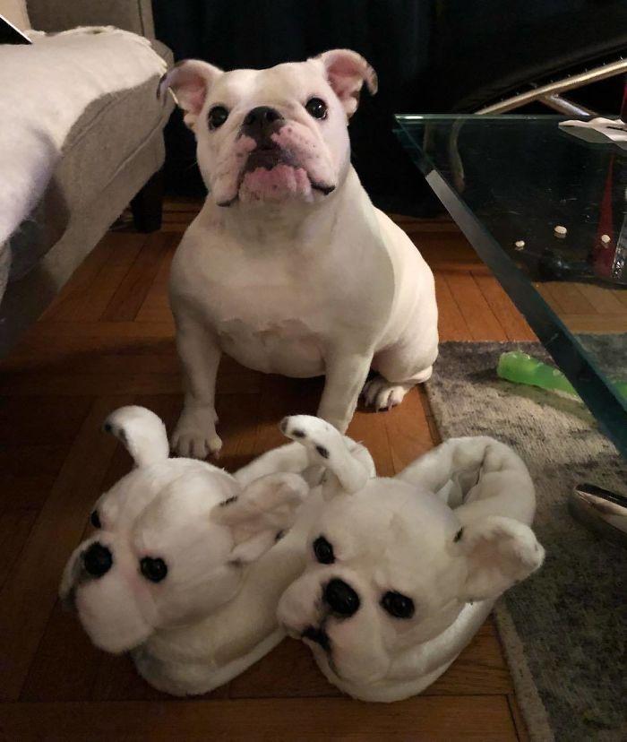Custom Pet Slippers