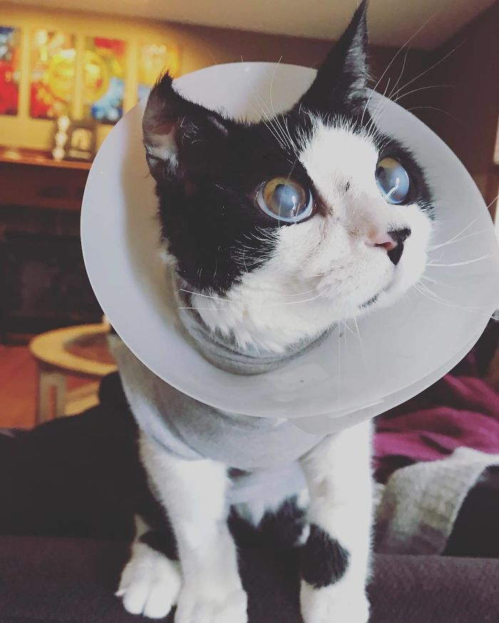 small veterinarian