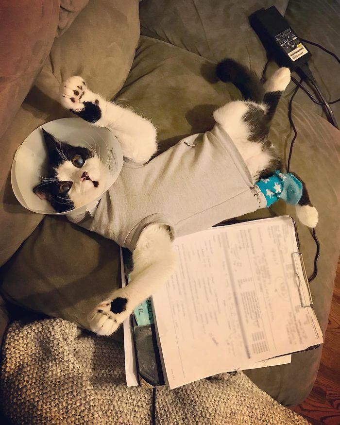 ER veterinarian