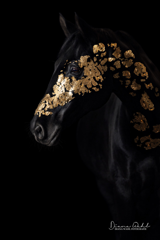 I Was Afraid To Show The Golden Horse But It Was The Best Decision In My Career