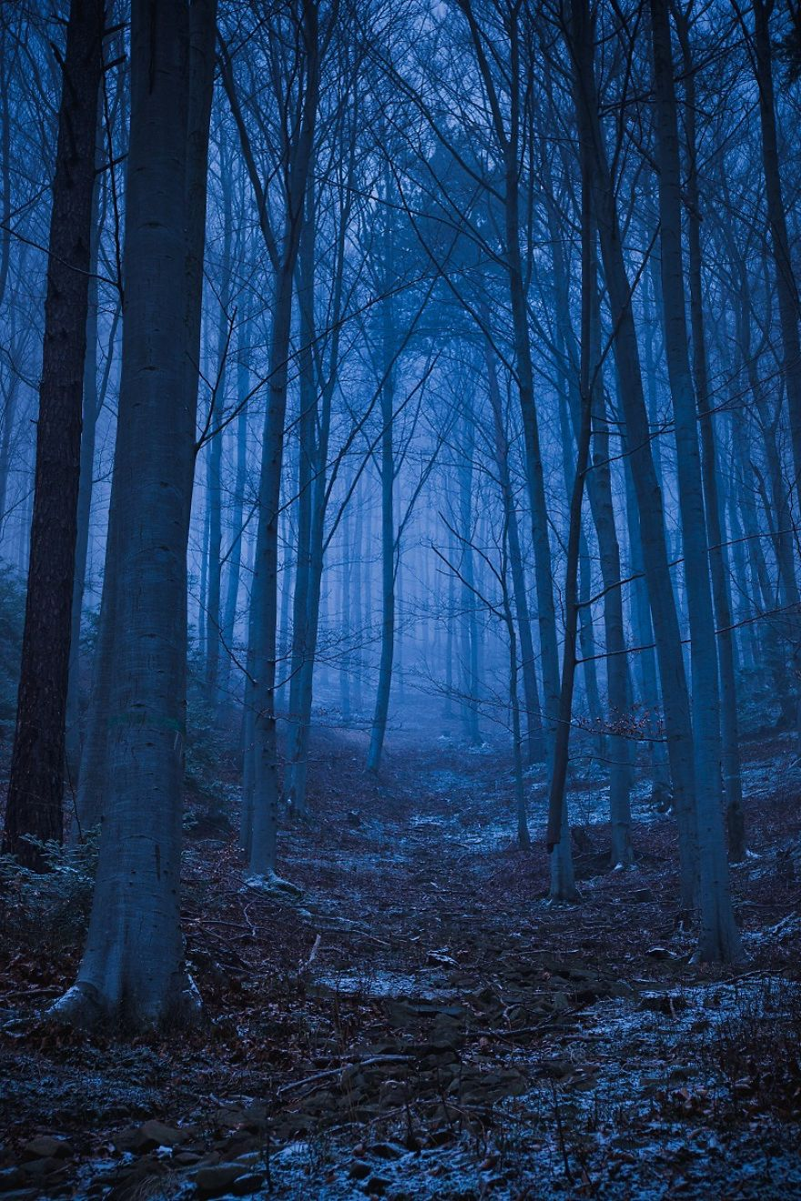 The Forest Near Barcice Photographed Late In The Evening