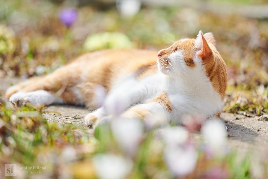 Meet Kazou – The Eyeless Cat Who Still Can 'See'!