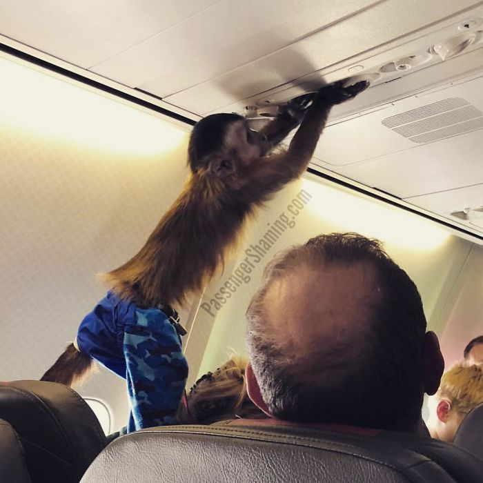 Can I get some peanuts in 11A, please? KTHX!
