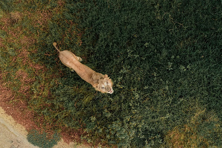 Несколько интересных фото, снятых с дрона :-)