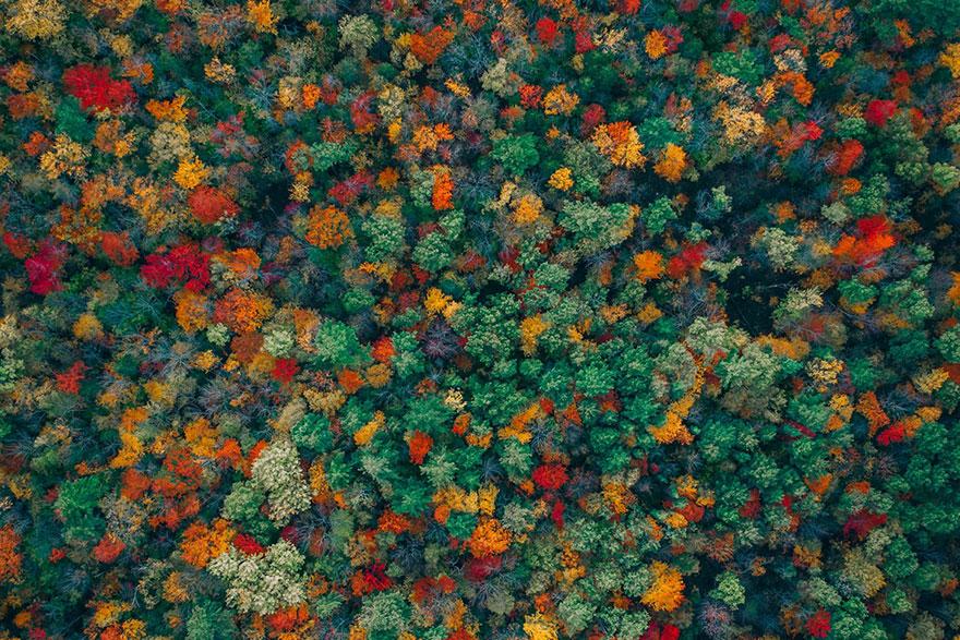 Fall In Love By Zekedrone