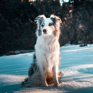 I Photograph My Dogs In Our Winter Wonderland