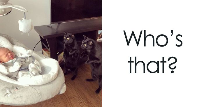 9592d5db9fe 30 Times Cats Cracked Us Up | Bored Panda