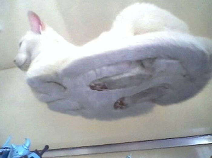 Hover Cat Is Here