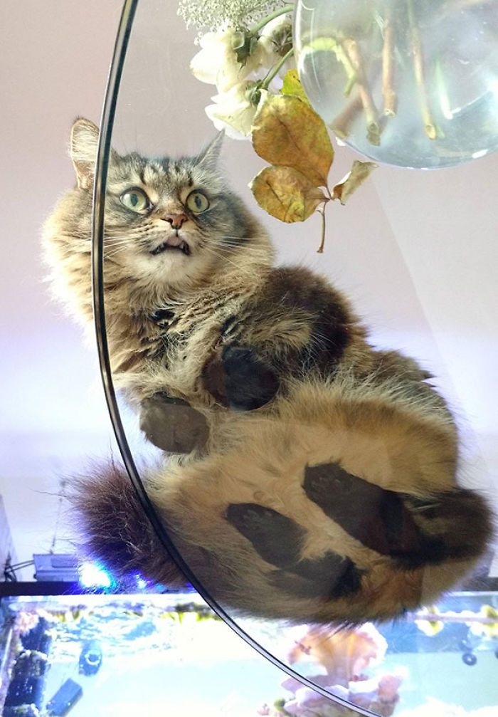 Cat Derping On A Glass Table