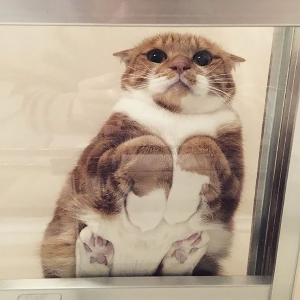 Мачки - Page 6 Funny-cats-on-glass-3-5c35fb4a8481b__605