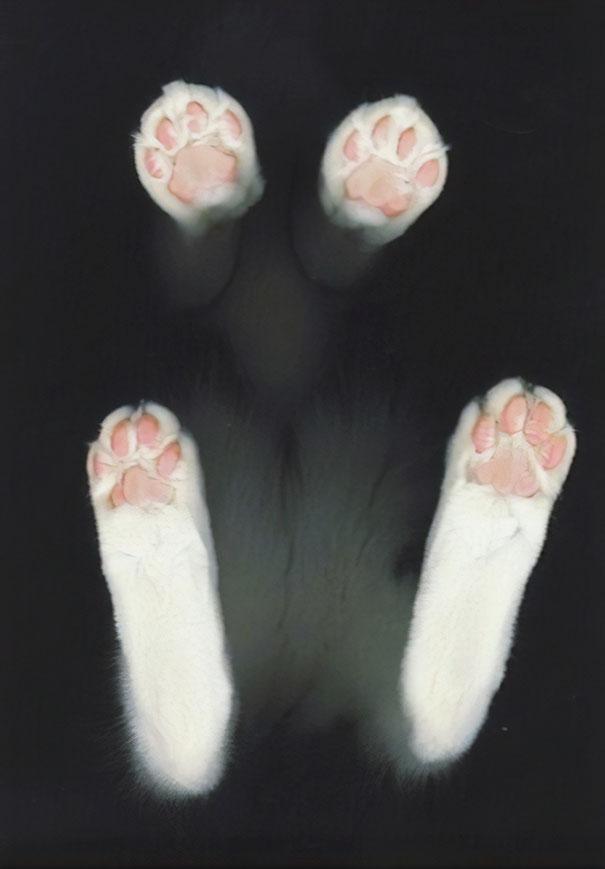 Bean Paws