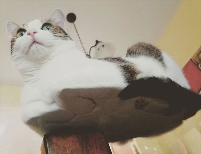 Cat On Glass Table