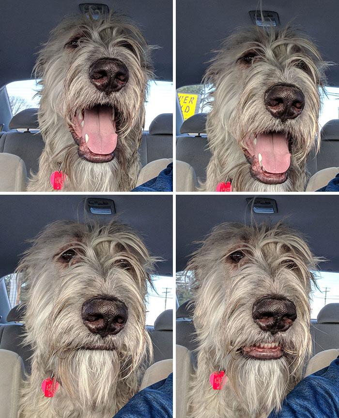 La cara de mi perro cuando vio que no ibamos al parque