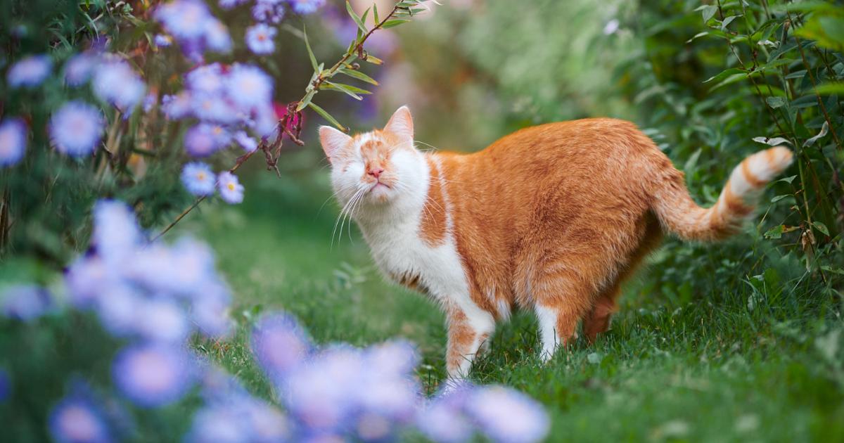 Hago fotos de mi gato que no tiene ojos pero ve con su corazón (25 imágenes)