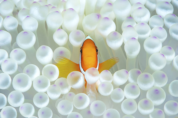 "Honorable Mention, Portrait Category, ""Nemo"" By Matteo Visconti"