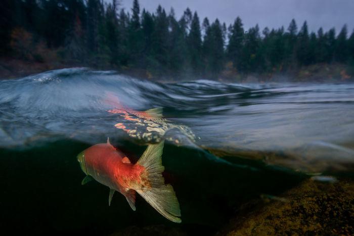 """5 место, холодная вода, """"туманное утро на реке Адамс"""" Эйко Джонс"""