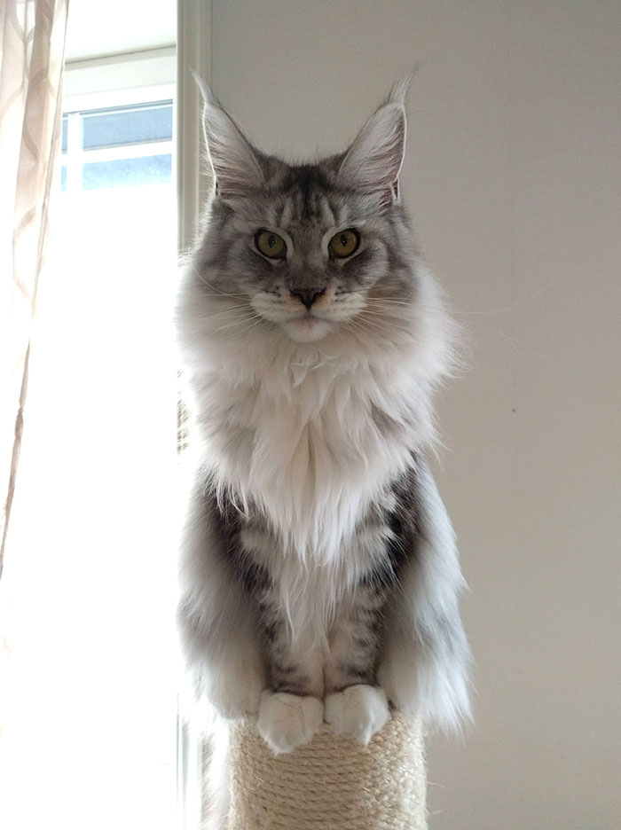 Alice, 9-Months-Old And Lots Of Floof